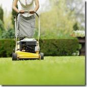 Mow Yard