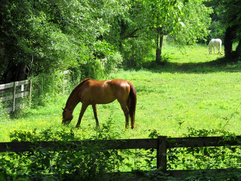 Horse Riding In Atlanta And Decatur Ga Atlanta Decatur