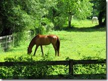 LittleCreekFarm-Horse