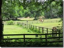 LittleCreekFarm-pasture3